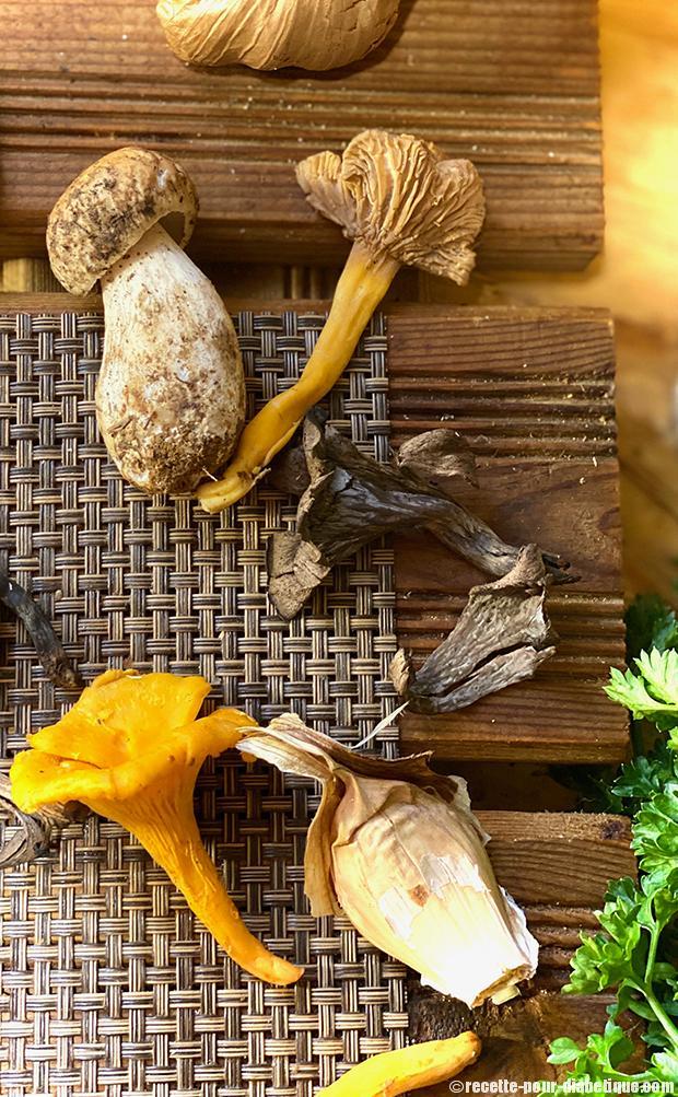 champignons-des-bois